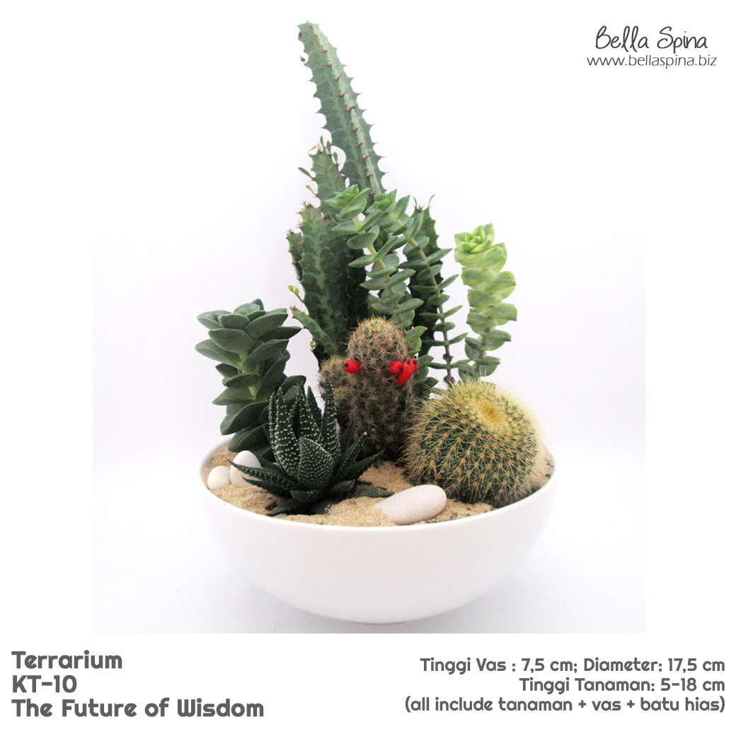 KT-10 Terrarium The Future of Wisdom