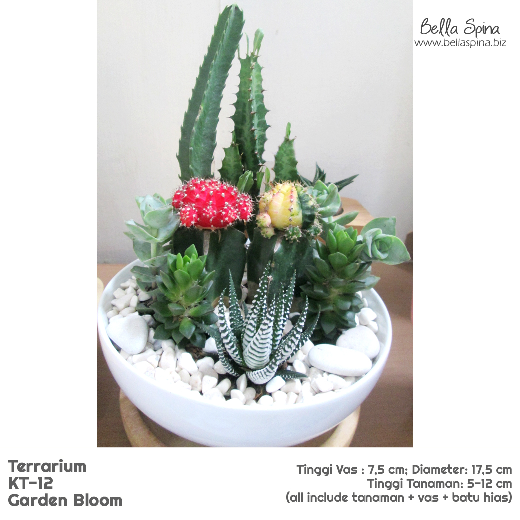 KT-12 Terrarium Shine The Ruby