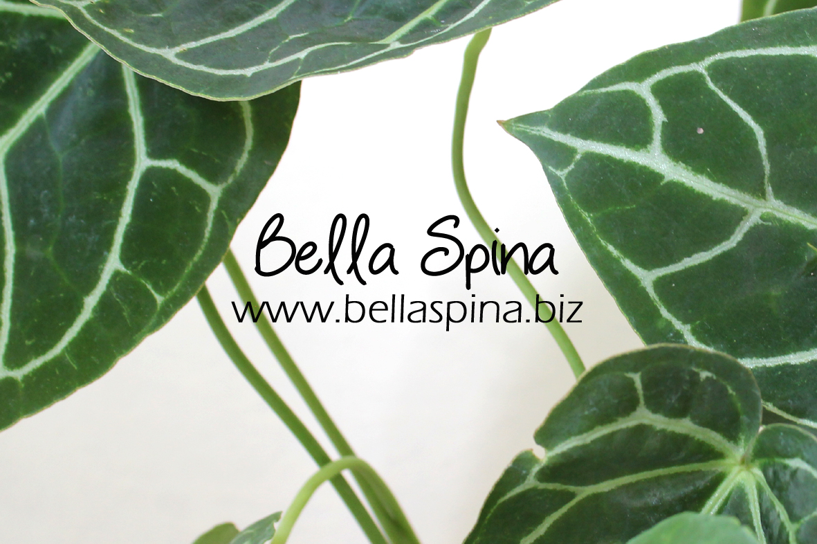 Bella Spina Indoorplant Store